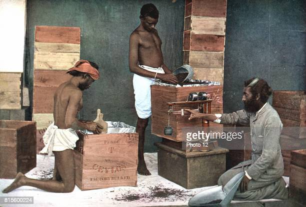 Packing and weighing tea for export on a Ceylon estate Colour illustration 1905