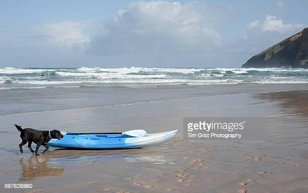 Paddle Board and dog Mawgan Porth, Cornwall