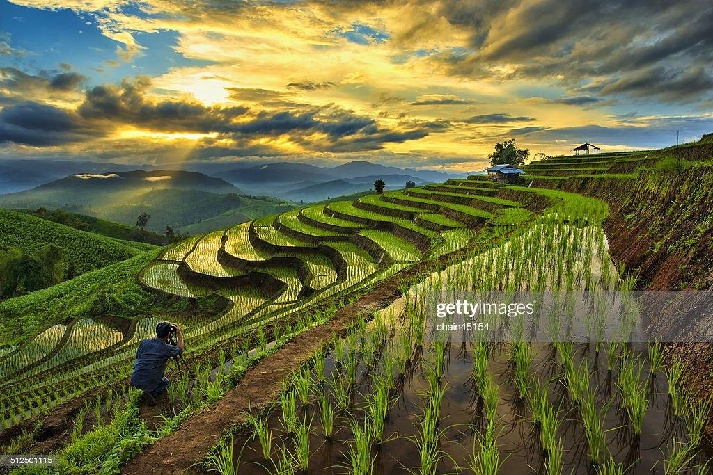 Paddy field, Chiang Mai, Thailand
