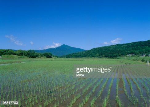 Paddy Field, Ishioka, Ibaraki, Japan