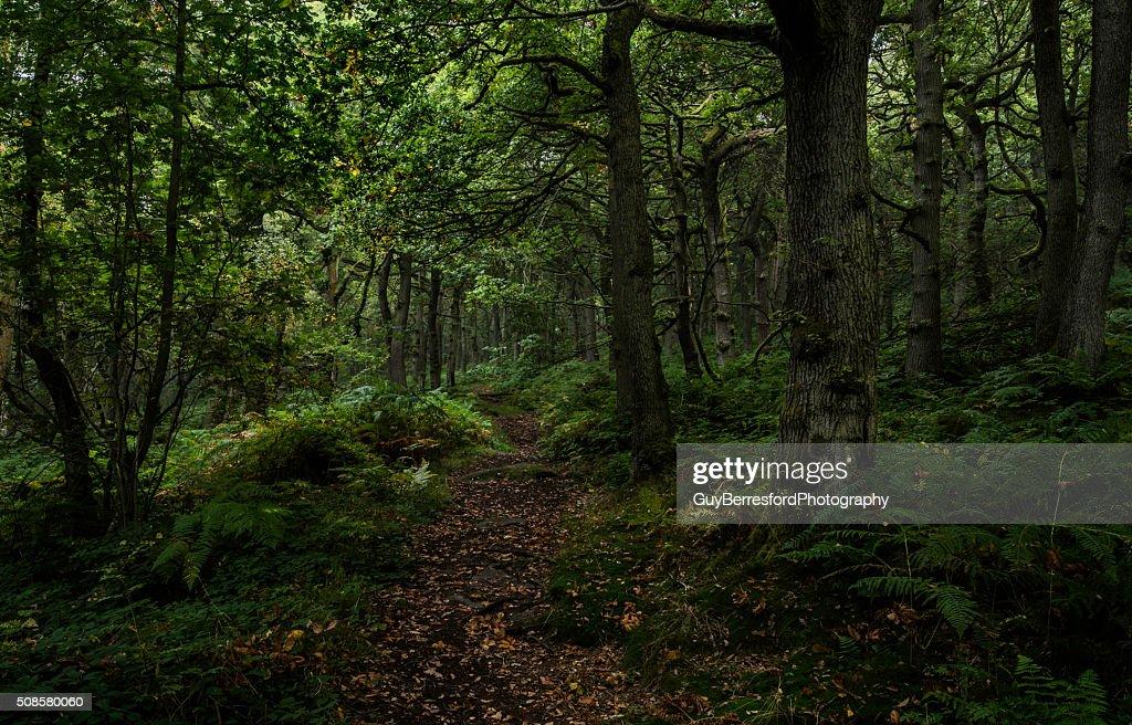 Padley Gorge path through the trees : Stockfoto