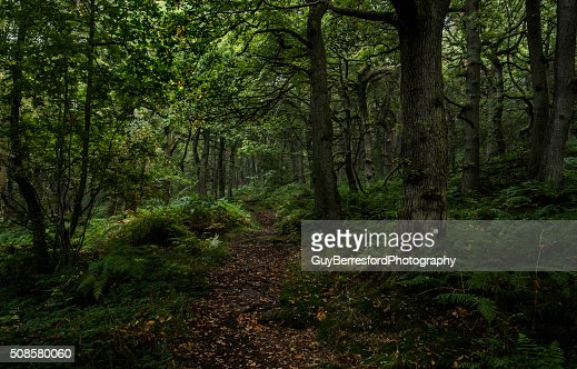 Padley Gorge path through the trees : Bildbanksbilder
