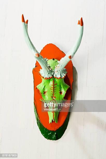 Painted antler of roe deer hanging on wall