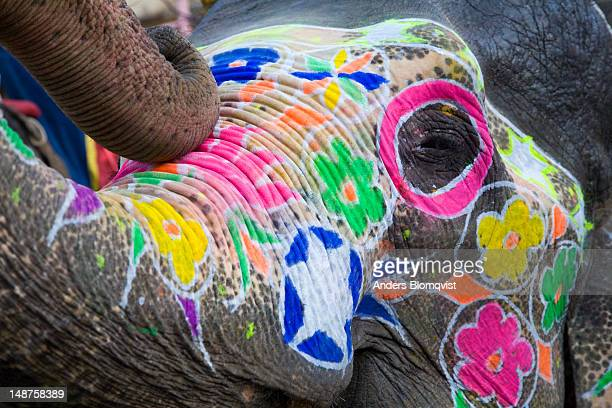 Painted elephant waiting to carry tourists up to Amber fort-palace.