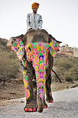Painted elephant with mahout walking on dust road