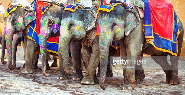Painted Elephants in Amer, India