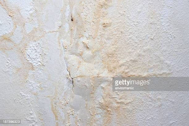 Mur peint de fond, affecté par humidité.