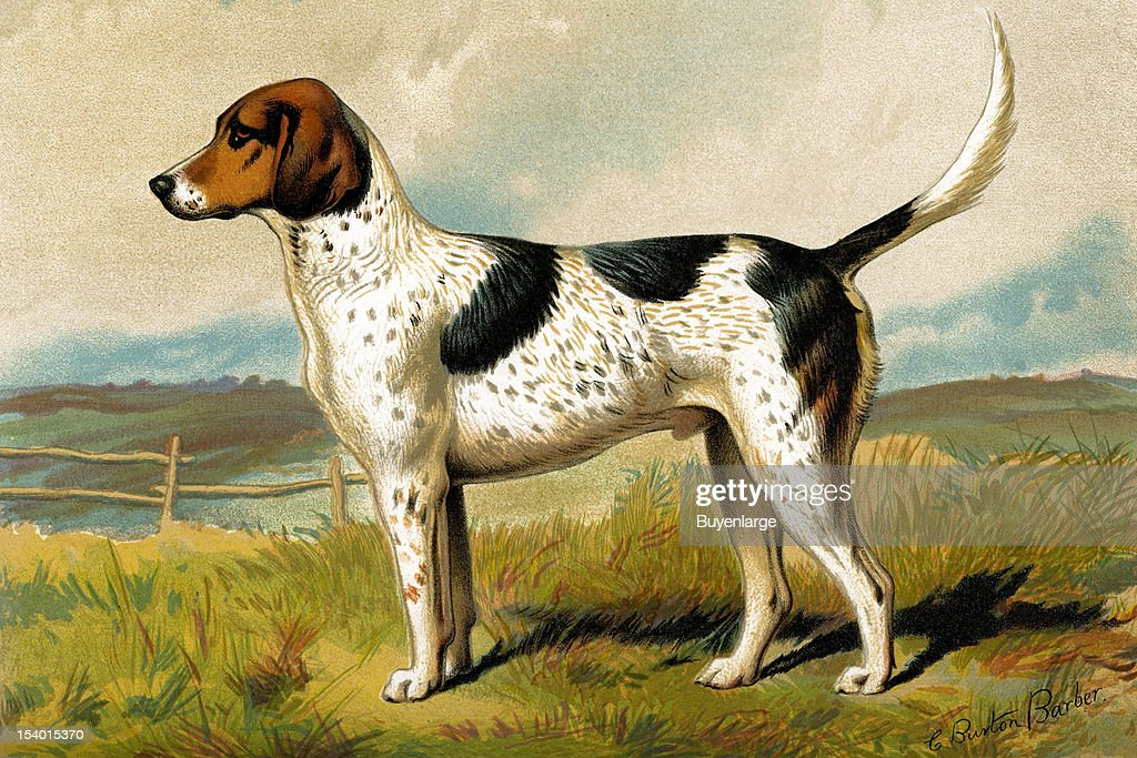 Painting of a Foxhound 1881