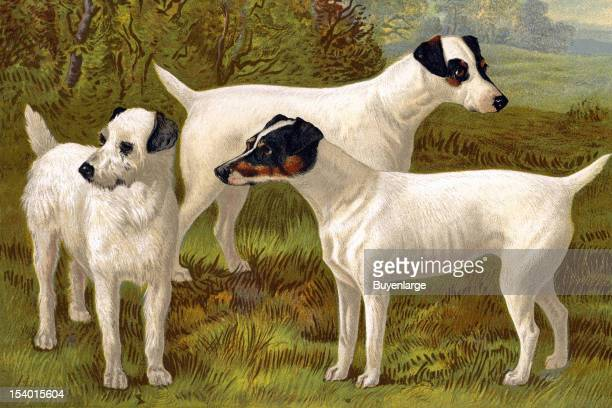 Painting of Fox Terriers 1881