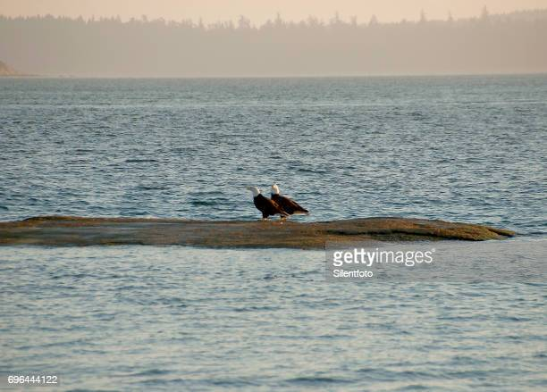 A Pair of Bald Eagles On a Sand Bank