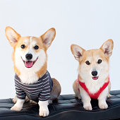 A pair of corgis sitting on a bench