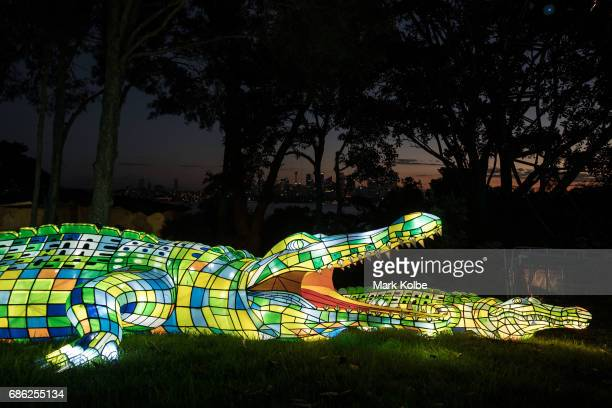 A pair of crocodiles installation one of the giant illuminated animal sculptures on display at Taronga Zoo is seen during a media call ahead of Vivid...