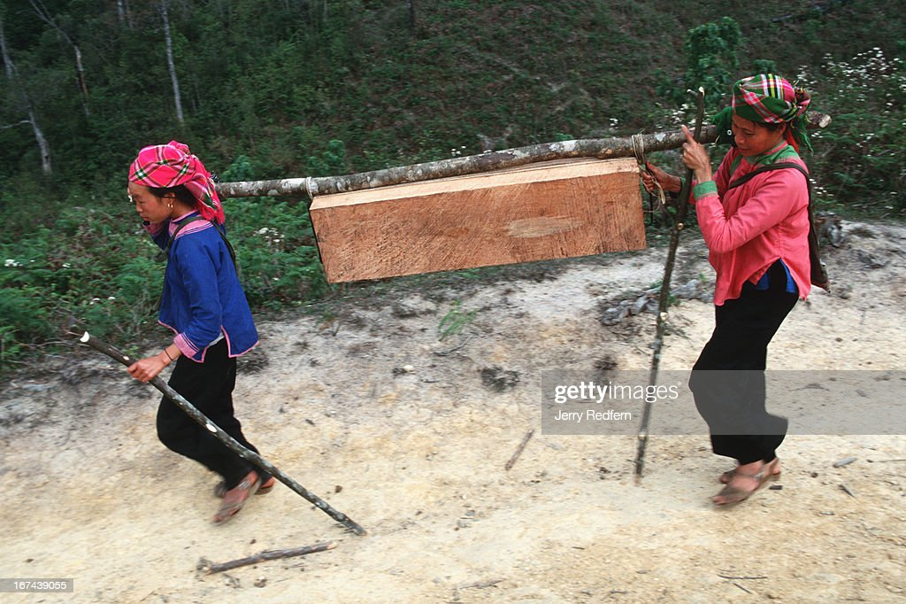 A pair of ethnic Giay women carry a 40 kilogram slab of sandalwood out of the Hoang Lien Son Nature Reserve in northern Vietnam. They then generally sell the wood to Vietnamese middlemen or Chinese traders. Logging is illegal in the Hoang Lien Son Nature Reserve, but a slab of rare sandalwood can fetch $20-$100, as much as a Hmong family can make in a year of rice farming..
