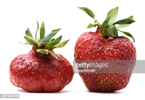 Pair of imperfect organic heirloom strawberries isolated : Stock Photo