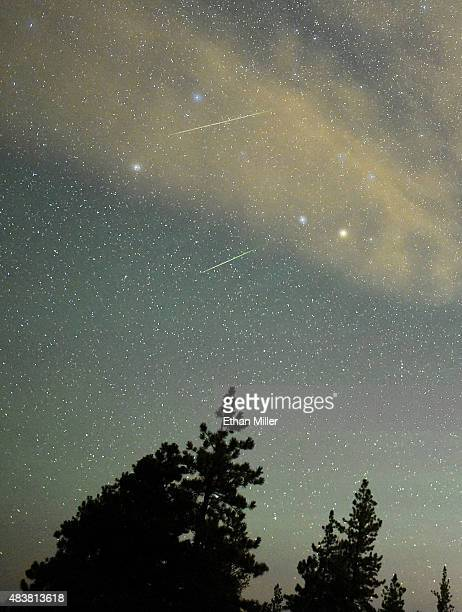 A pair of Perseid meteors streak across the sky above desert pine trees on August 13 2015 in the Spring Mountains National Recreation Area Nevada The...