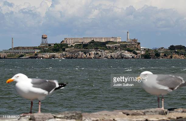 A pair of seagulls stand on a ledge across from Alcatraz Island on April 7 2011 in San Francisco United States If the federal budget impasse cannot...