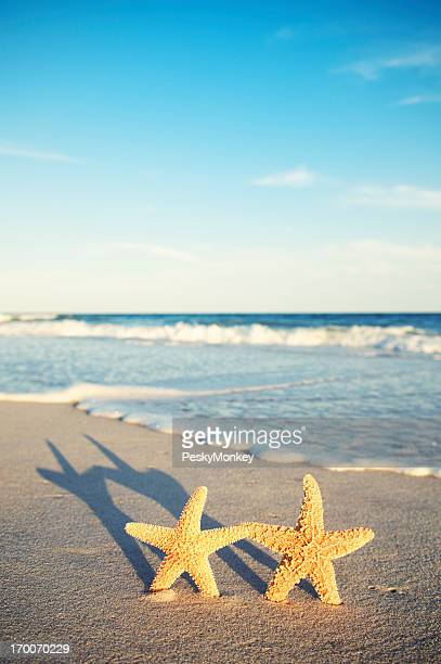 Pair of Starfish Stand Together at Sunset
