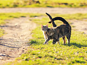 pair of sweet loving cat walking on the bright green meadow in Sunny spring garden