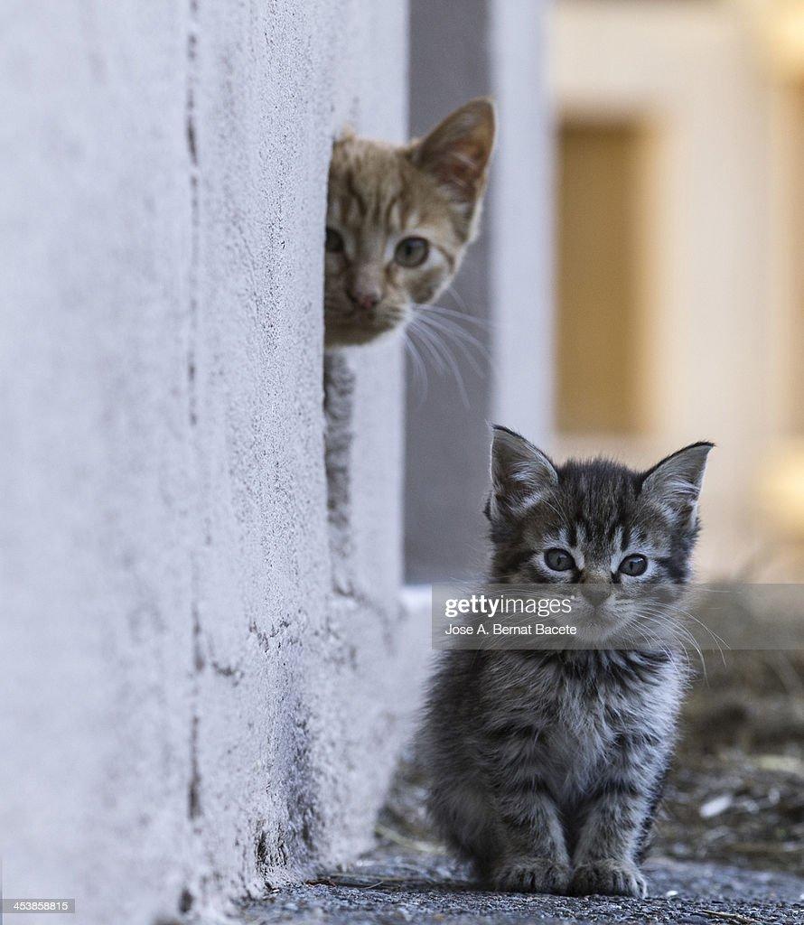 A pair of tender glances