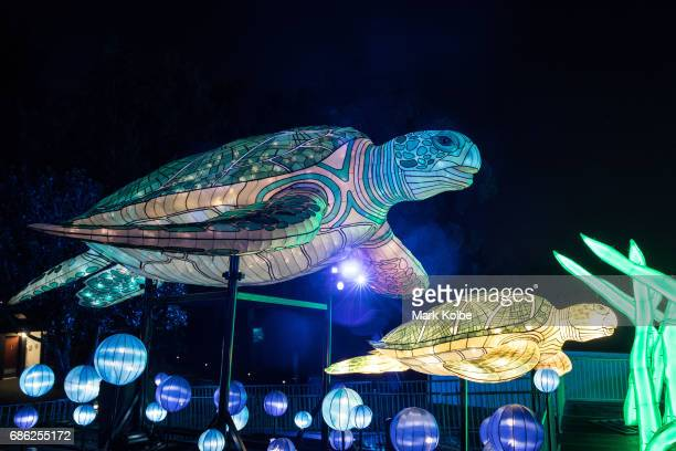 A pair of turtles installation one of the giant illuminated animal sculptures on display at Taronga Zoo is seen during a media call ahead of Vivid...