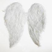 Pair of wings, studio shot