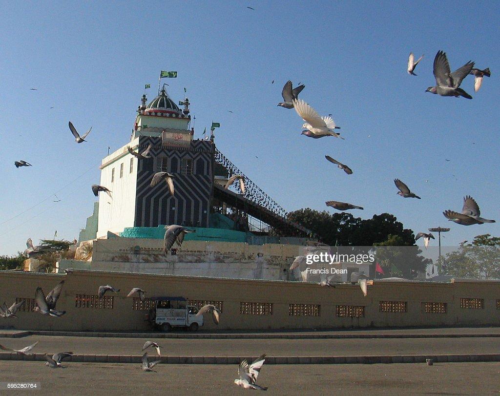 PAKISTAN_KARACHI_pigeons flying near abdullah shah ghazi mazar at clifton in karachion nov2011{ PHOTO BY ILAS JDEAN/PAK IMAGES}