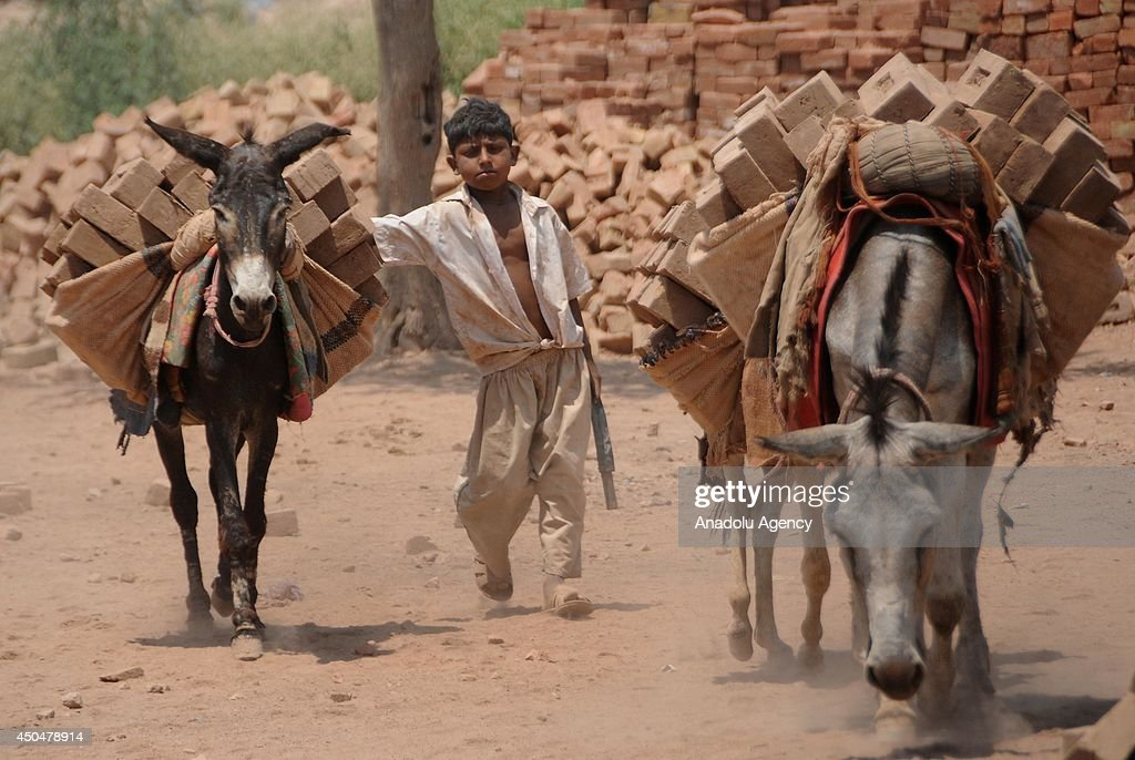A Pakistani boy, who works at a kiln factory, guides his donkeys loaded with bricks on the eve of World Day against Child Labour on June 12, 2014, in the outskirts of Islamabad, Pakistan. The World Day Against Child Labour launched by the International Labour Organization (ILO) aiming to focus attention on the global extent of child labour. Hundreds of millions of girls and boys throughout the world are engaged in work that deprives them of adequate education, health, leisure and basic freedoms, violating their rights and they exposed to the worst forms of child labour such as work in hazardous environments.