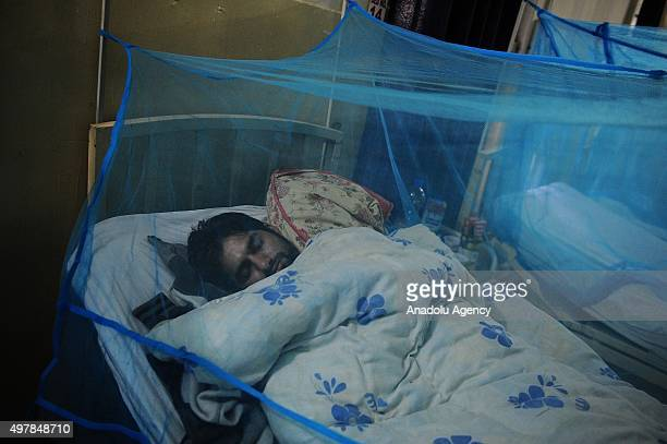 Pakistani dengue fever patients lie on their bed with a mosquito net at Benazir Butto Hospital in Pakistan's Rawalpindi on November 18 2015 The virus...