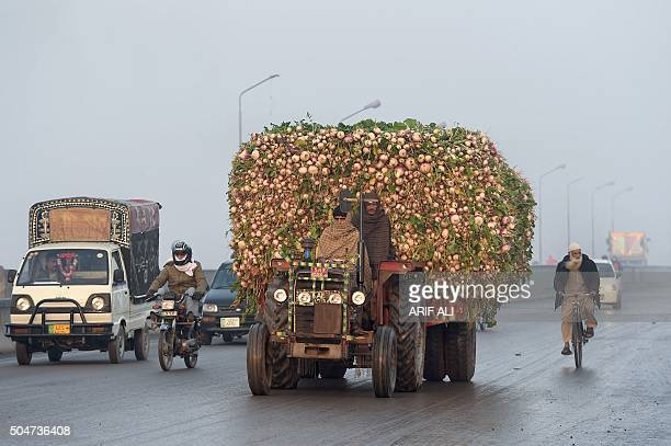 Pakistani farmer drives a tractor trolly loaded with radishes on the way to the vegetable market in Lahore on January 13 2016 AFP PHOTO / ARIF ALI /...