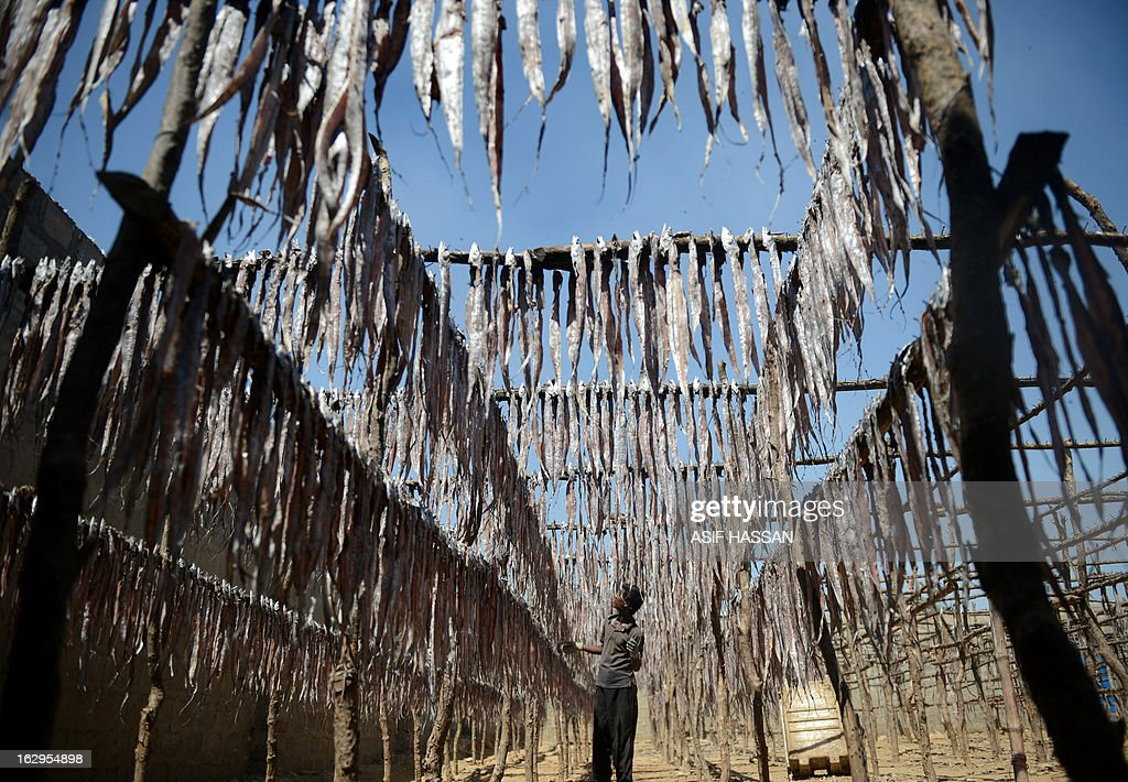 A Pakistani fisherman hangs fish to dry in the sun in Karachi on March 2, 2013. The European Union is to resume imports of seafood from Pakistan, officials said, ending a six-year suspension imposed over hygiene fears. AFP PHOTO/Asif HASSAN