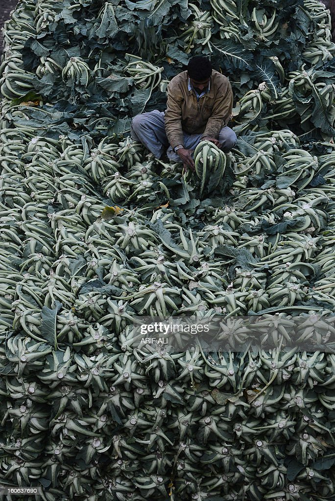 A Pakistani man arranges cauliflowers at a vegetable market in Lahore on February 4, 2013. Year-on-year inflation stood at 6.9 percent in November, the State Bank of Pakistan said in a statement, a faster fall than had been estimated. Food inflation dropped to 5.3 percent and non-food inflation to 8.1 percent. AFP PHOTO/ Arif ALI