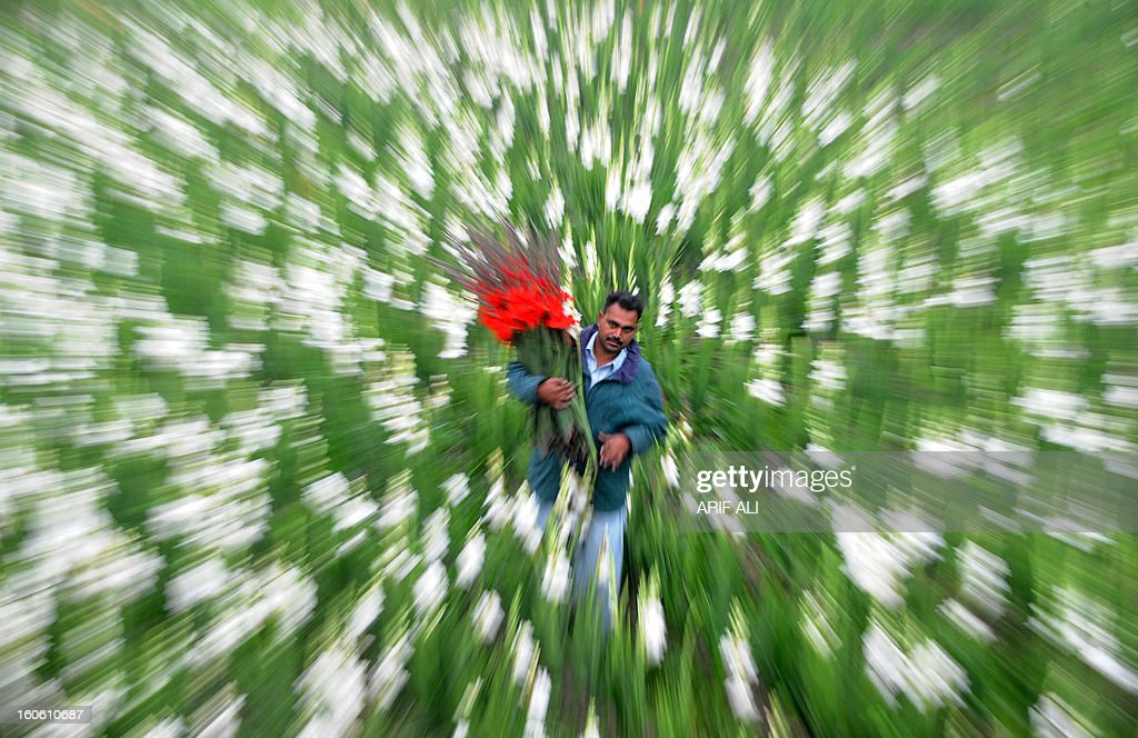 A Pakistani man carries flower as he walks through a field in Lahore on February 3, 2013. Year-on-year inflation stood at 6.9 percent in November, the State Bank of Pakistan said in a statement, a faster fall than had been estimated. Food inflation dropped to 5.3 percent and non-food inflation to 8.1 percent. AFP PHOTO/Arif ALI