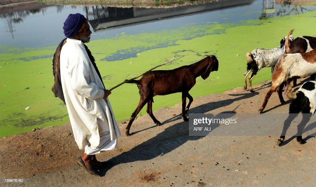 A Pakistani man herds his goats alongside a body of polluted water in Lahore on January 22, 2013. AFP PHOTO/Arif ALI