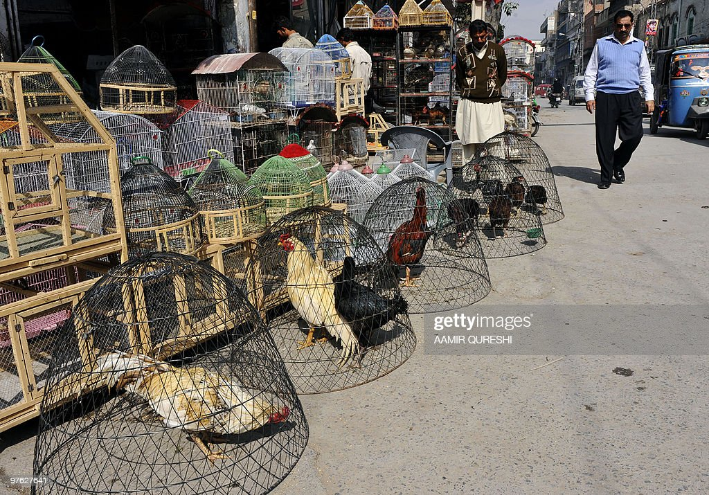A Pakistani pedestrian walks past birds and animals at a market in Rawalpindi on March 4 2010 AFP PHOTO/ AAMIR QURESHI