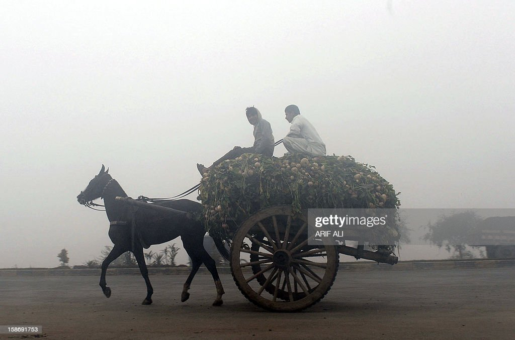 A Pakistani rider drives a horse-drawn cart loaded with turnips on a foggy street in Lahore on December 24, 2012. The ongoing spell of dense fog and freezing weather conditions has continued to disturb the scheduled arrival and departure of flights and trains in Pakistan's Punjab province.