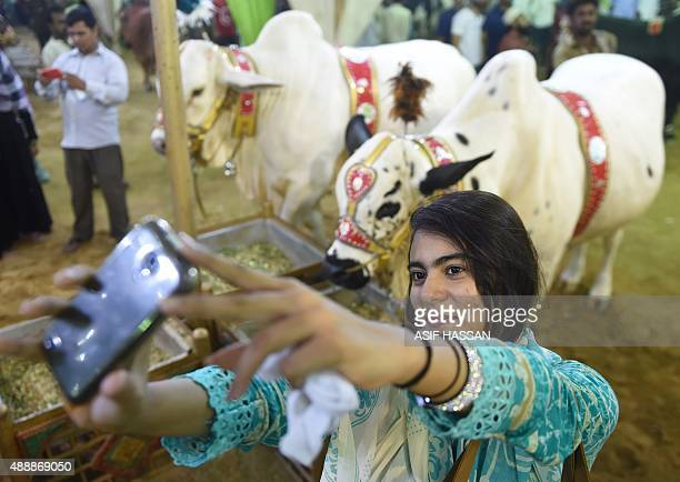 A Pakistani woman takes a selfie with cows at one of the main animal markets set up for the forthcoming sacrificial Eid alAdha festival in Karachi on...