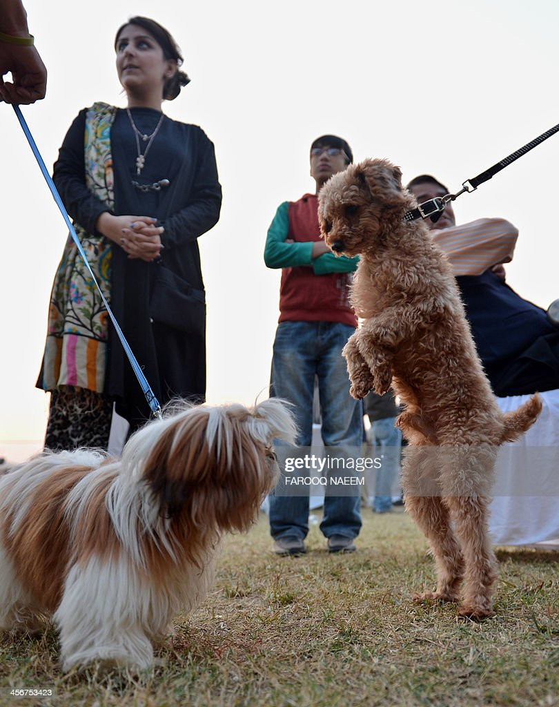 Pakistani women hold on to their leashed pets at a dog show held during a lifestyle exhibition in Islamabad on December 15, 2013. The two-day exhibition is being held at the Jinnah Convention Centre. AFP PHOTO/Farooq NAEEM