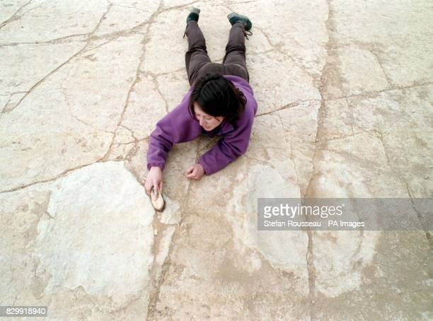 Palaeontologist Dr Jo Wright of Bristol University scrubs one of the Dinosaur footprints possibly belonging to a Brachiosaurus and the largest found...