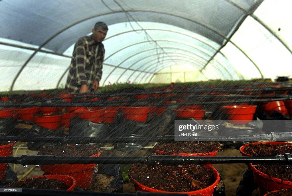 Farm Worker In Israel Stock Photos   Farm Worker In Israel Stock