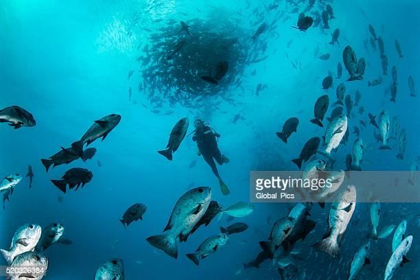 Palau-Micronésie
