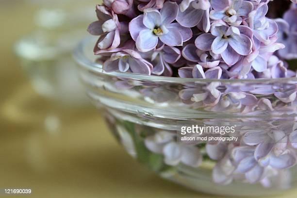 Pale purple lilacs