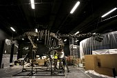 Paleontologists piece together the bones of a dinosaur on September 10 2014 at the Musee des Confluences a science centre and anthropology museum in...