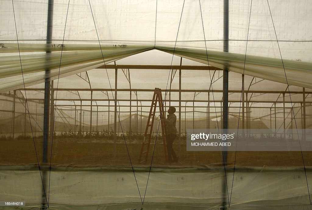 Palestinian agriculture labourers prepare greenhouses in Beit Hanun in the northern Gaza Strip on April 4, 2013.