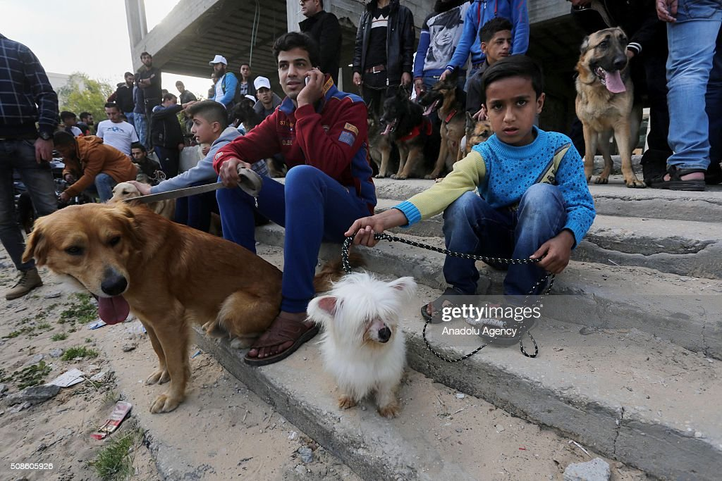 Palestinian animal lovers host an event with their different breeds of dogs aiming to draw attention to the importance of giving homes to dogs, in the area of al-Katiba in Gaza City, Gaza on February 5, 2016.