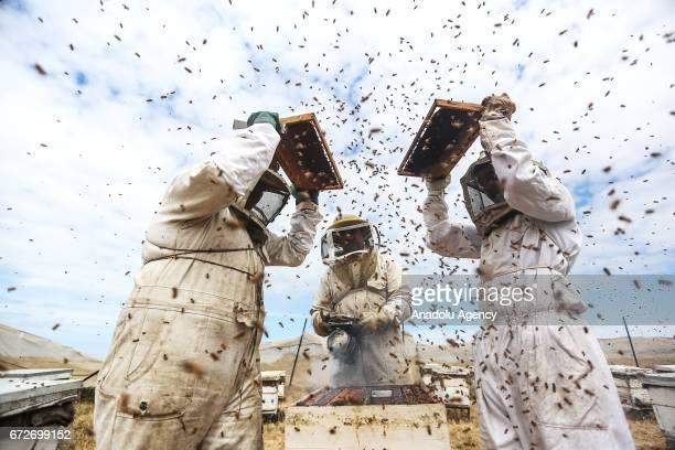 Palestinian apiarists keep bees in order to collect their honey at honey filling facility in Tel alSultan district of Rafah Gaza on April 25 2017...