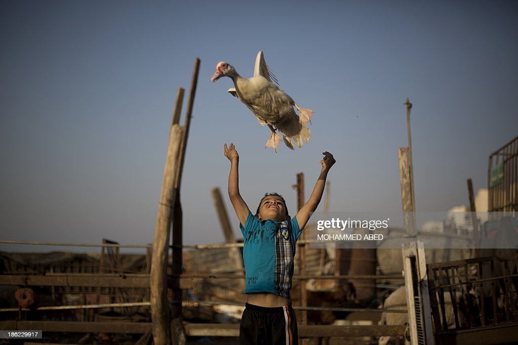 A Palestinian boy plays with a duck near the house of Palestinian prisoner Omar Massud's family, held by Israel since 1993, prior to his release in Gaza City on October 29, 2013. Israel is preparing to release 26 long-serving Palestinian prisoners, the second batch of 104 inmates who are to be freed in line with commitments to US-brokered peace talks.