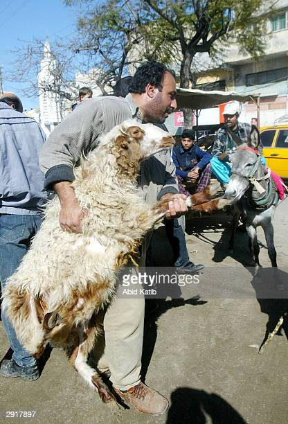 Palestinian buys a sheep one day before the Muslim holiday Eid alAdha in Gaza City Gaza Strip The Muslim holiday Eid alAdha the Festival of Sacrifice...