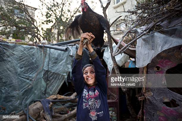 Palestinian child plays with a chicken in a povertystricken quarter of Beit Lahia town in the northern Gaza Strip on January 5 2016 AFP PHOTO /MAHMUD...