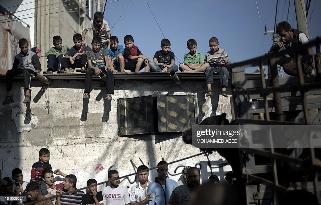 Palestinian children watch from the roof of a building the slaughtering of a cow by a local butcher as Muslims marked the first day of the Eid al-Adha holiday on October 15, 2013 in the Rafah refugee camp in the southern Gaza Strip. Muslims around the world celebrate Islam's major Eid, or Feast of Sacrifice, by slaughtering sheep, goats, cows and camels to commemorate Prophet Abraham's willingness to sacrifice his son, Ismail, on God's command . AFP PHOTO / MOHAMMED ABED