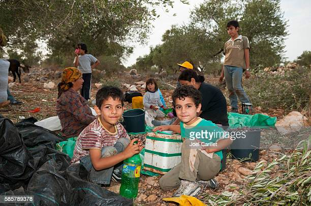 Palestinian family harvesting olives in Zababdeh, West Bank